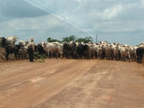 Jornada de Estudos Haggai em Rondônia